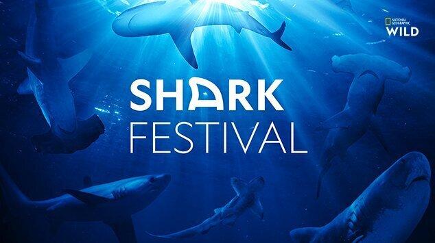 Shark Festival