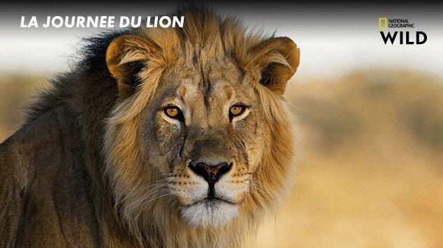 La journée du Lion